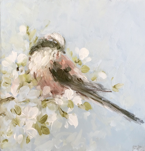 Longtailed Tit on Blossom, 2016