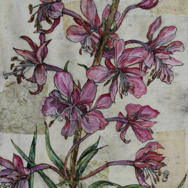 Vicky Oldfield - Rosebay Willowherb